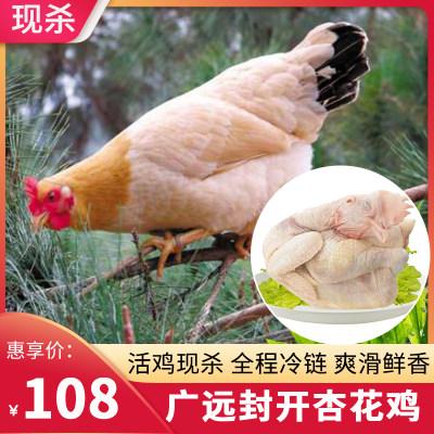 广远杏花鸡