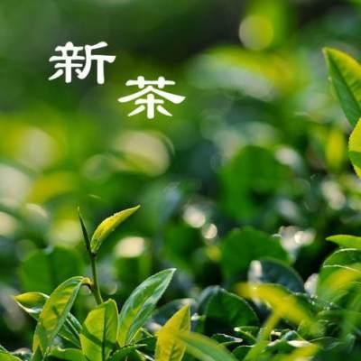 【南雄特色馆】 丹霞山 清明前茶 绿茶 白毛尖500g/包