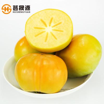 甜柿 信宜大成北梭现摘新鲜甜脆柿子甜柿子无核5斤装中果精装包邮