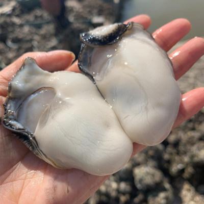 阳江程村大号生蚝肉约30粒/2斤装 去壳鲜活 现捕现剥 新鲜水产海鲜 大生蚝海蛎子广东包邮