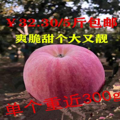 山西万荣冰糖心红富士 应季水果 5斤现摘现苹果 脆甜 顺丰包邮