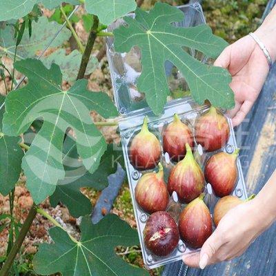 新鲜无花果 红皮品仙果 水果2019 1盒装约0.45kg