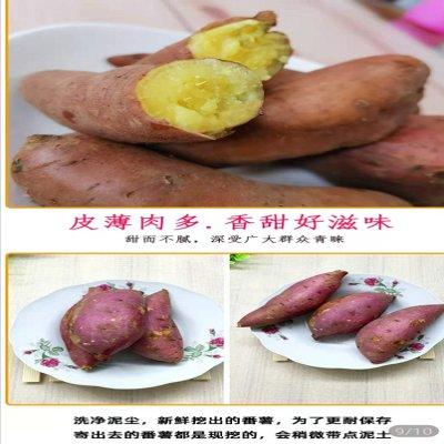 库区农家栗子红薯粉香甜