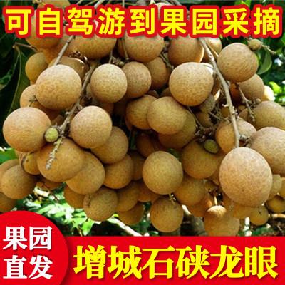 广东增城石硖龙眼新鲜包邮当季水果现摘现发鲜桂圆5斤装