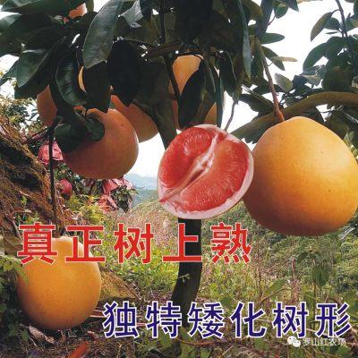 蜜柚三红蜜柚矮红柚酵素柚子精品装