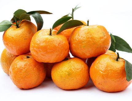 英德大湾镇砂糖橘5斤