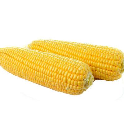 甜玉米5斤