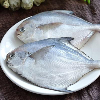 壹条鱼金鲳鱼(约1斤)