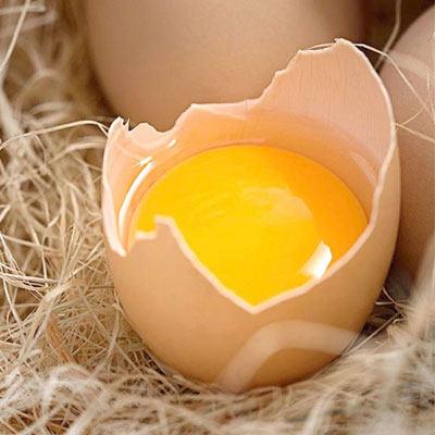 五指毛桃鸡蛋30枚(黄壳)