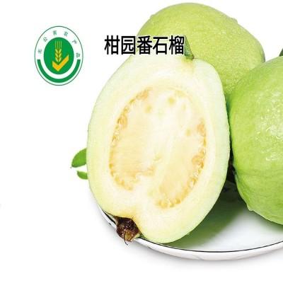 海丰丰美白心芭乐番石榴5斤新鲜水果当季芭乐番石榴