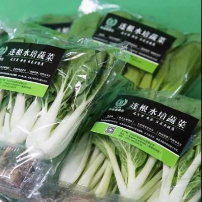 【36.8元包邮】供港品质连根水培活菜现摘现发当季品种组合搭配