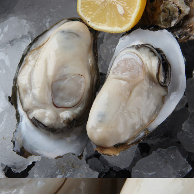 程村生蚝 鲜活一箱10斤装大号牡蛎 海鲜水产 新鲜带壳现捞 广东包邮